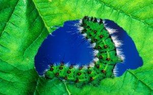 caterpillar-meat_w520